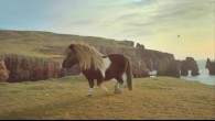 Moonwalk de poney Shetland