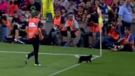 Le chat noir du FC Barcelone