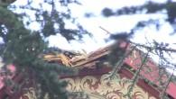 Baum fällt auf Villa-Dach