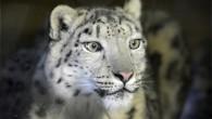 Départ de Thalia du Zoo de Servion 2