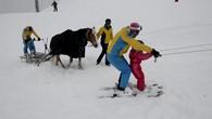 Des chevaux pour tirer les petits skieurs