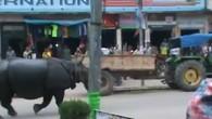Nashorn stürmt durch Innenstadt