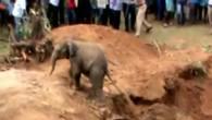 Elefantenbaby aus Brunnen gerettet