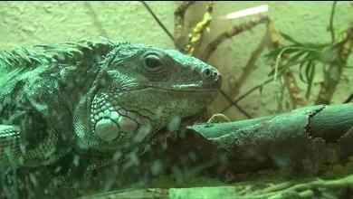 Le Zoo La Garenne se sépare de ses animaux exotiques
