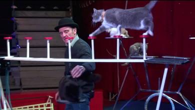 Il dresse des chats