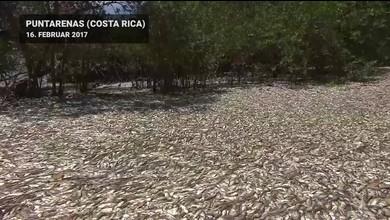 Massensterben vor Costa Ricas Küste