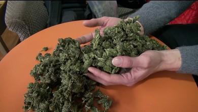 Du cannabis en vente libre à Lausanne