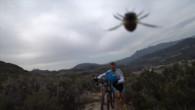Bienen gehen auf Velofahrer los