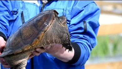 Un havre de paix pour les tortues
