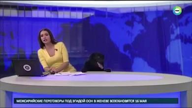 Vierbeiner unterbricht Nachrichten